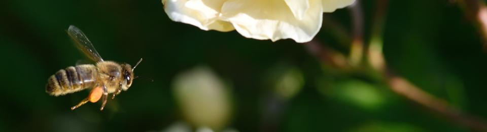Le Blog du Petit Oiseau